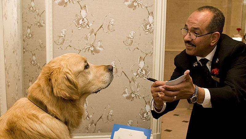 cachorro-labrador-servico-hotel-hospedagem-quarto-petrede