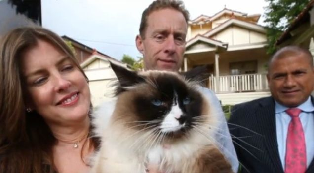 gato-vendido-junto-com-casa