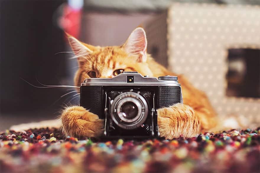 Aprenda a tirar boas fotos do seu bichinho de estimação