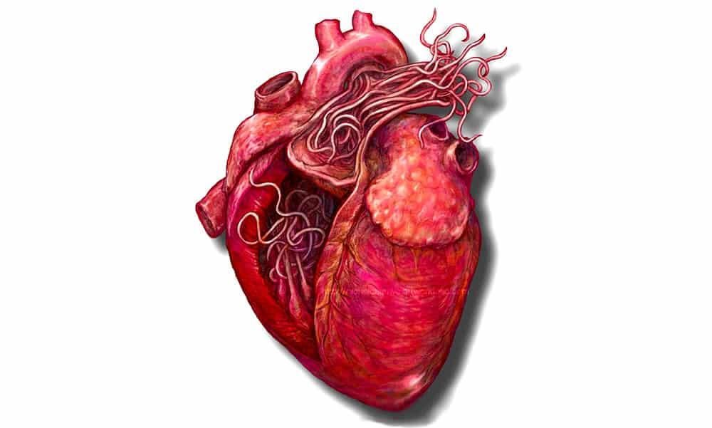 Dirofilariose – Verme do coração