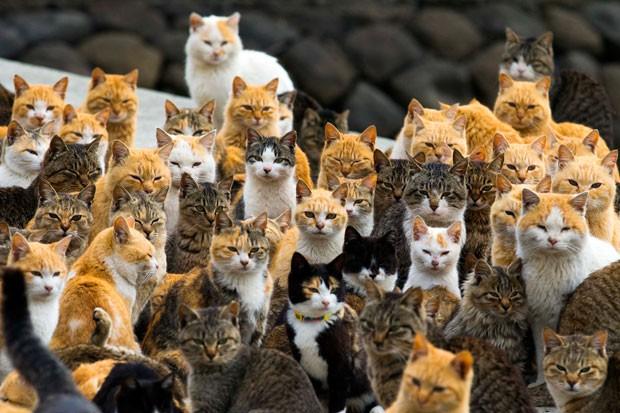 2015-03-03t065939z_105387823_gm1eb330nob01_rtrmadp_3_japan-cats
