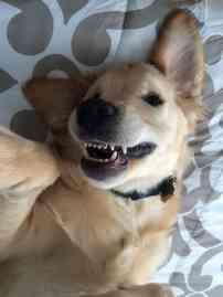 cachorro-usando-aparelho-nos-dentes-5
