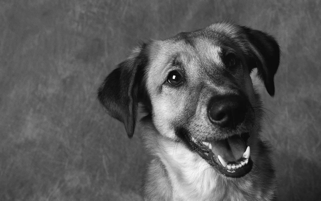 Você adotou um cachorro de rua? Na verdade, foi ele quem adotou você