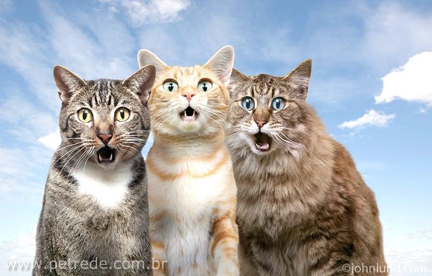 Gato com câmera no pescoço fica famoso por tirar fotos da vizinhança