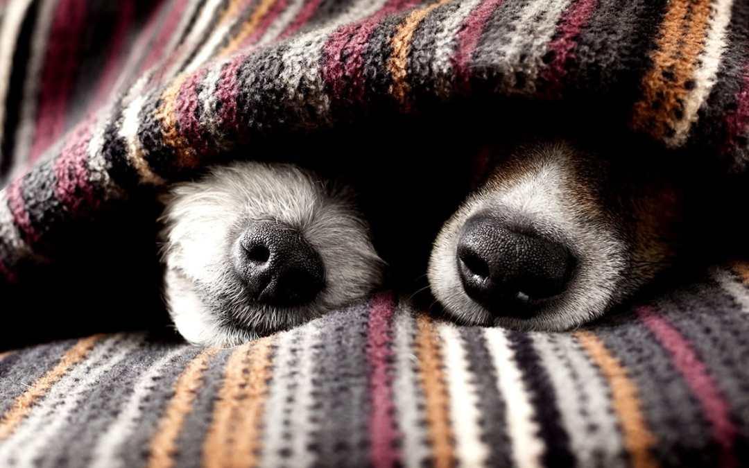 Saiba como proteger o seu pet do frio no inverno