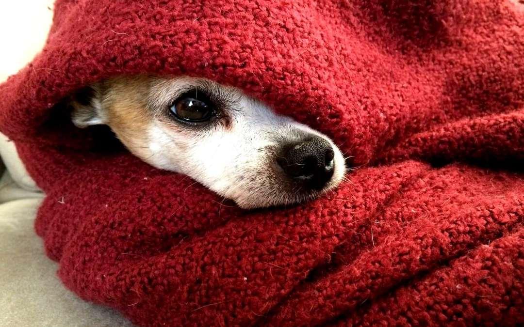 Doenças de inverno também atingem os pets