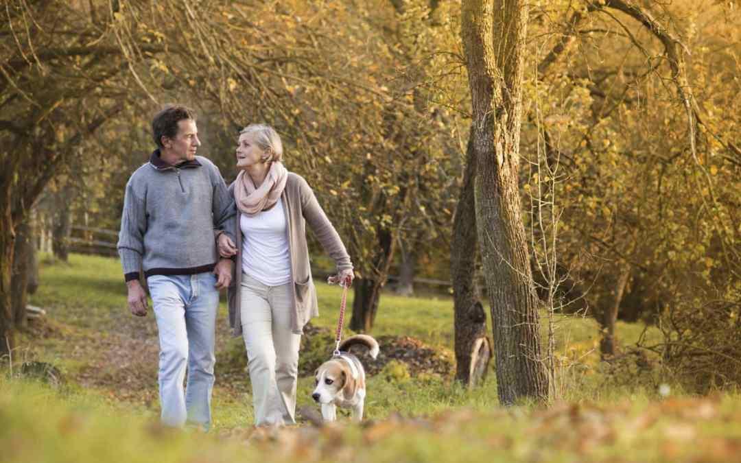 Idosos que passeiam com cães de estimação são mais saudáveis, indica estudo