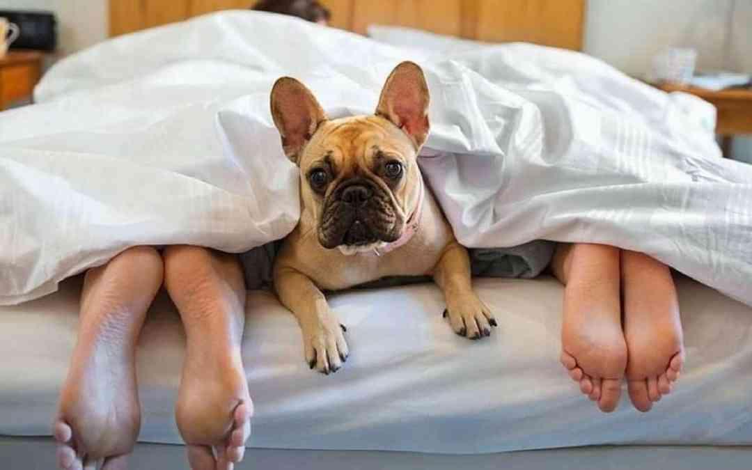 É Pet Friendly! Onde e como se hospedar com o seu pet durante as férias!