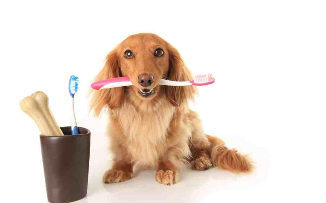 Escovando os dentes do seu cachorro