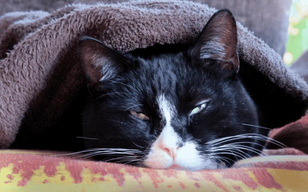 Seu gato está espirrando demais? Saiba quais são as razões e como tratar