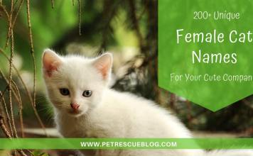 Unique Female Cat Names