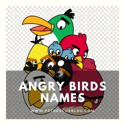 Angry Birds Names