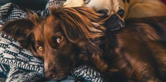 Top 5 Signs your Dog is Suffering From Stress