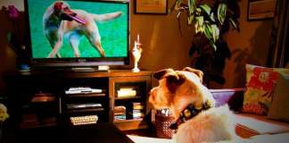 Dog TV Shows