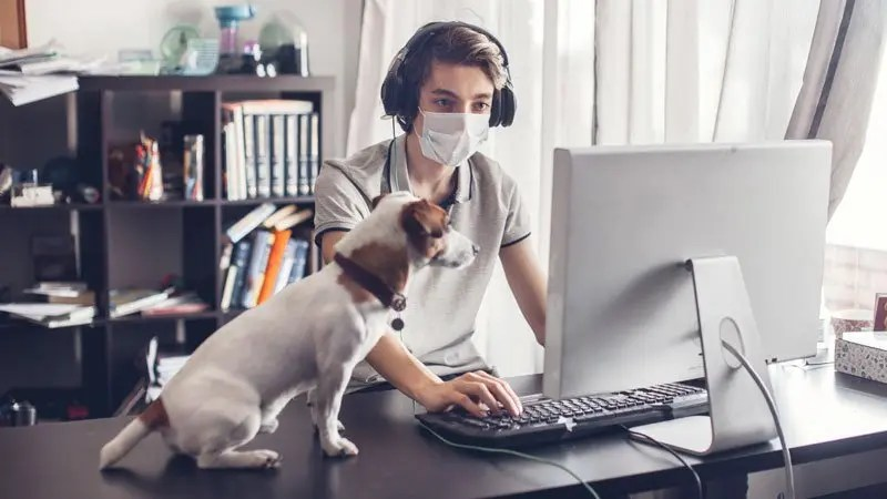 Young man works at a laptop during coronavirus lockdown wearing a surgical mask watched by small terrier dog