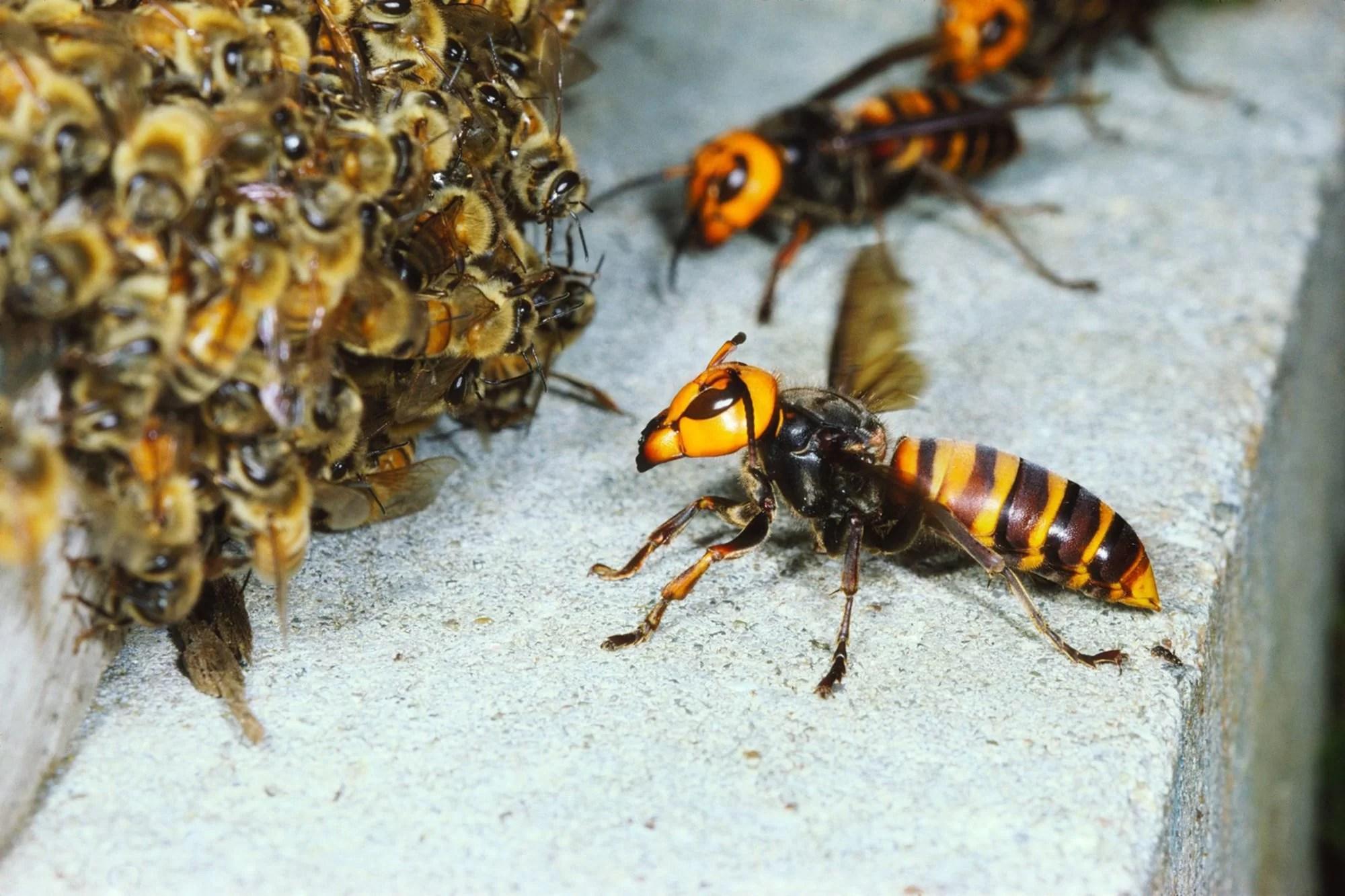 jasa pembasmi sarang tawon dan lebah