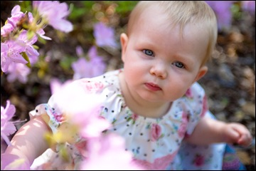 baby sitting in flowers at brookside gardens