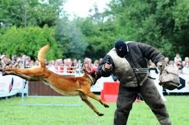 chien de sport