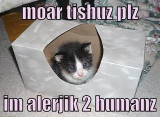 ... -Choo! Why Does My Kitten Keep Sneezing? Pollen Allergy Swollen Eyes