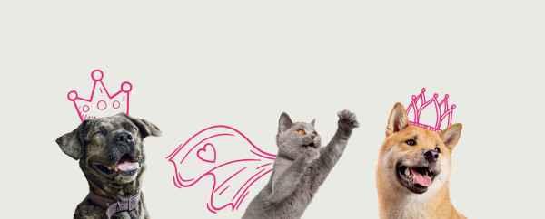 free cat sudbury ontario # 47