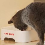 Top 5 Best Automatic Cat Feeder Wet Food Refrigerated Reviews 2020