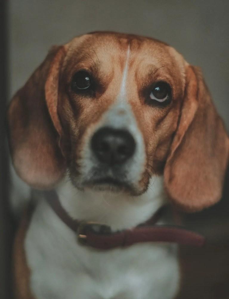10 Cutest dog breeds perfect for adoption. https://www.petspalo.com