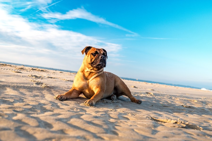 Bulldog Dog Breeds- Complete Profile, History, and Care. https://www.petspalo.com
