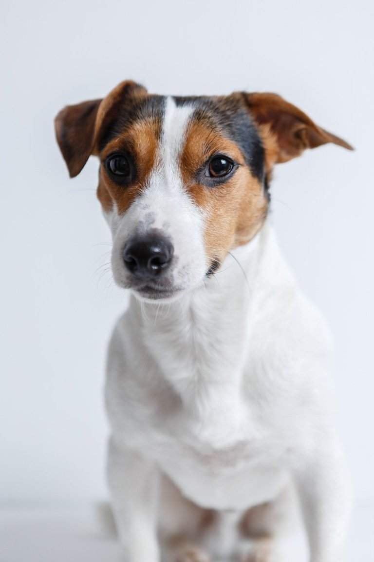 15 Best Small Dog Breeds for Kids. https://www.petspalo.com
