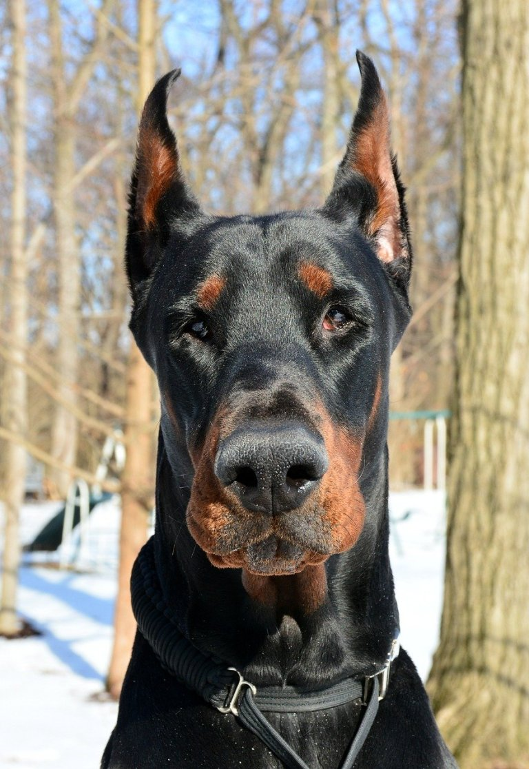 10 Best Big Dog Breeds for Families in 2021. https://www.petspalo.com