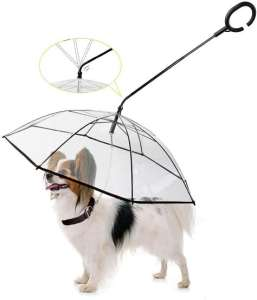 5 Best Umbrella for Dogs in 2021