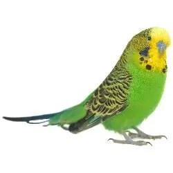 Bird Category