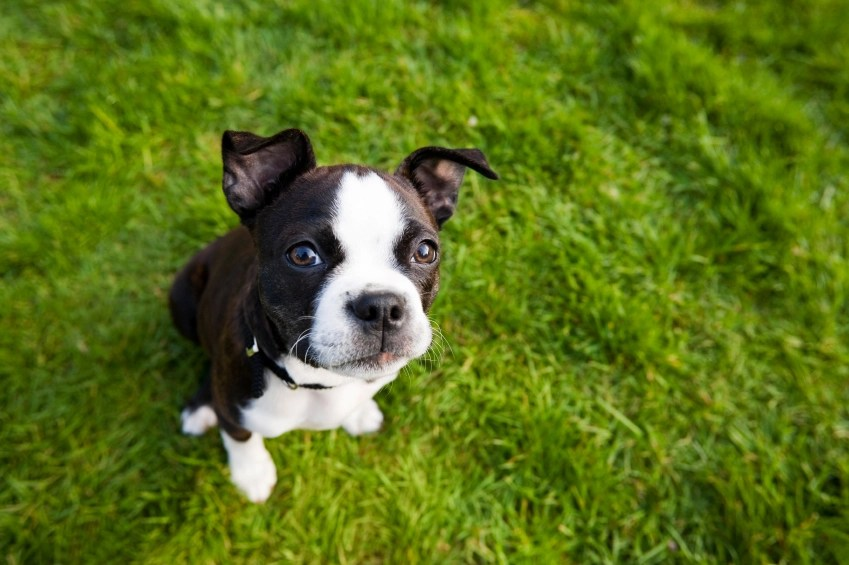 Tips for Healthy Lawns and Healthy Pets! – Petswelcome.com