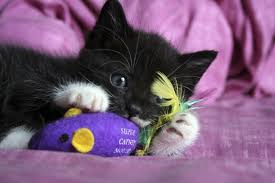 A couple of sniffs of this herb and your kitty is ready to let the good times roll. Image - www.aspcapetinsurance.com
