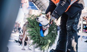 Finnmarksløpet Champion Kokos 2016