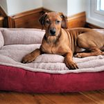 The Best Dog Bed Reviews Pet Toy Uk 2020