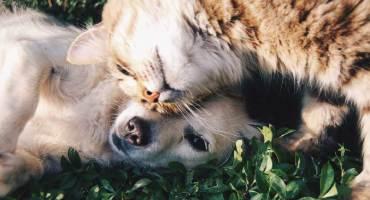 Companion Animal Medical Services