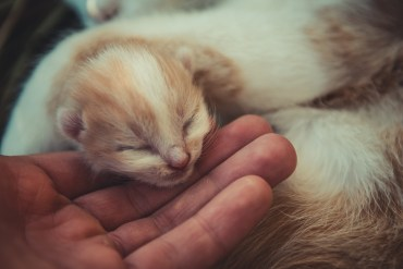5 Ways to Look After The Weakest Kitten