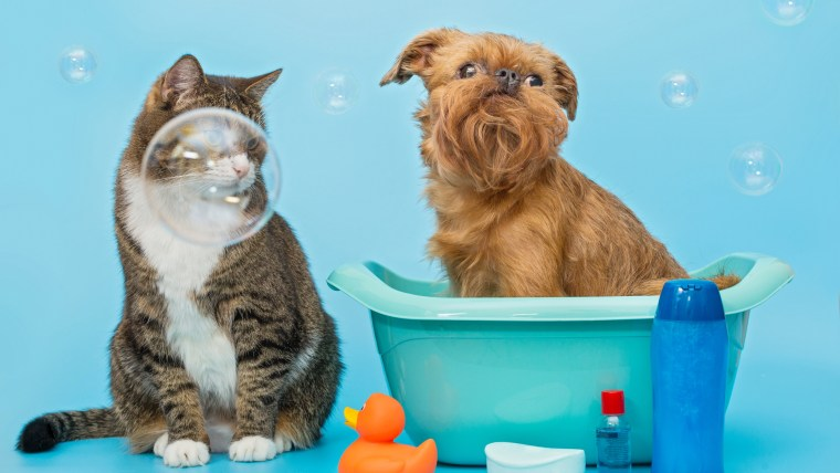 5 Reasons Why Pet Grooming is Important
