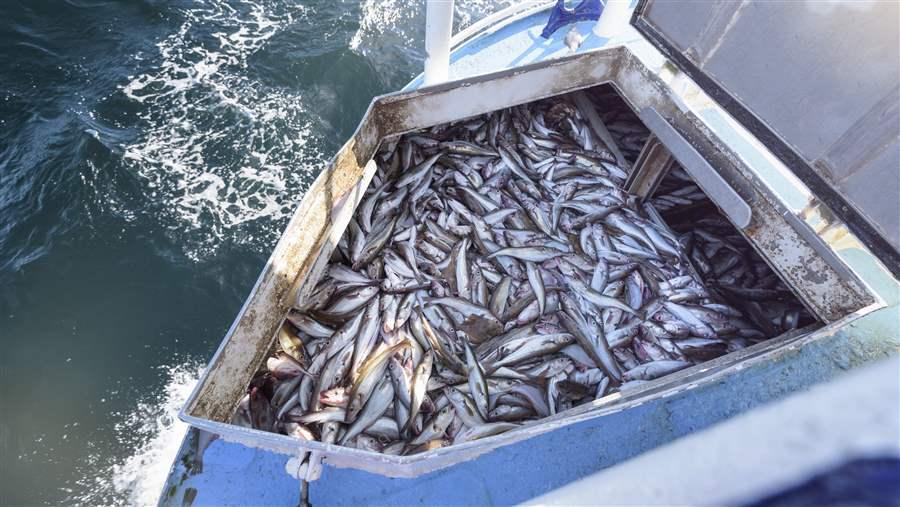 Overfishing in Europe