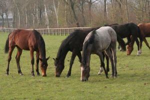 Pferdezucht steht bei uns im Mittelpunkt | Pferde Ritter