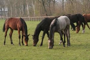 Pferdezucht steht bei uns im Mittelpunkt   Pferde Ritter
