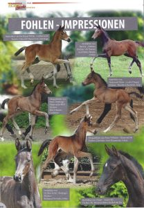 Horse Magazin Gestüt Sprehe Ausgabe Dezember 2017
