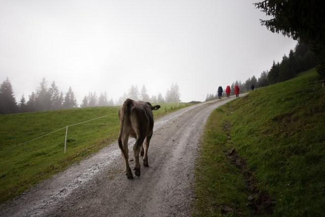 Aufstieg zur Starkenburger Hütte