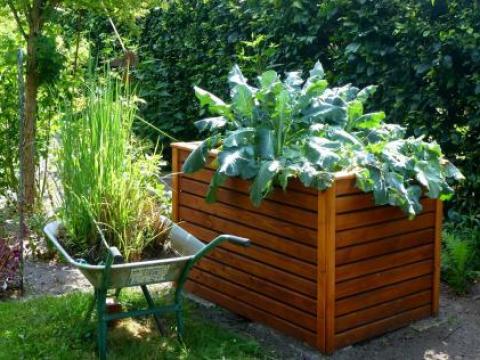 hochbeet bepflanzen stauden welche pflanzen für das hochbeet? - pflanzenfreunde