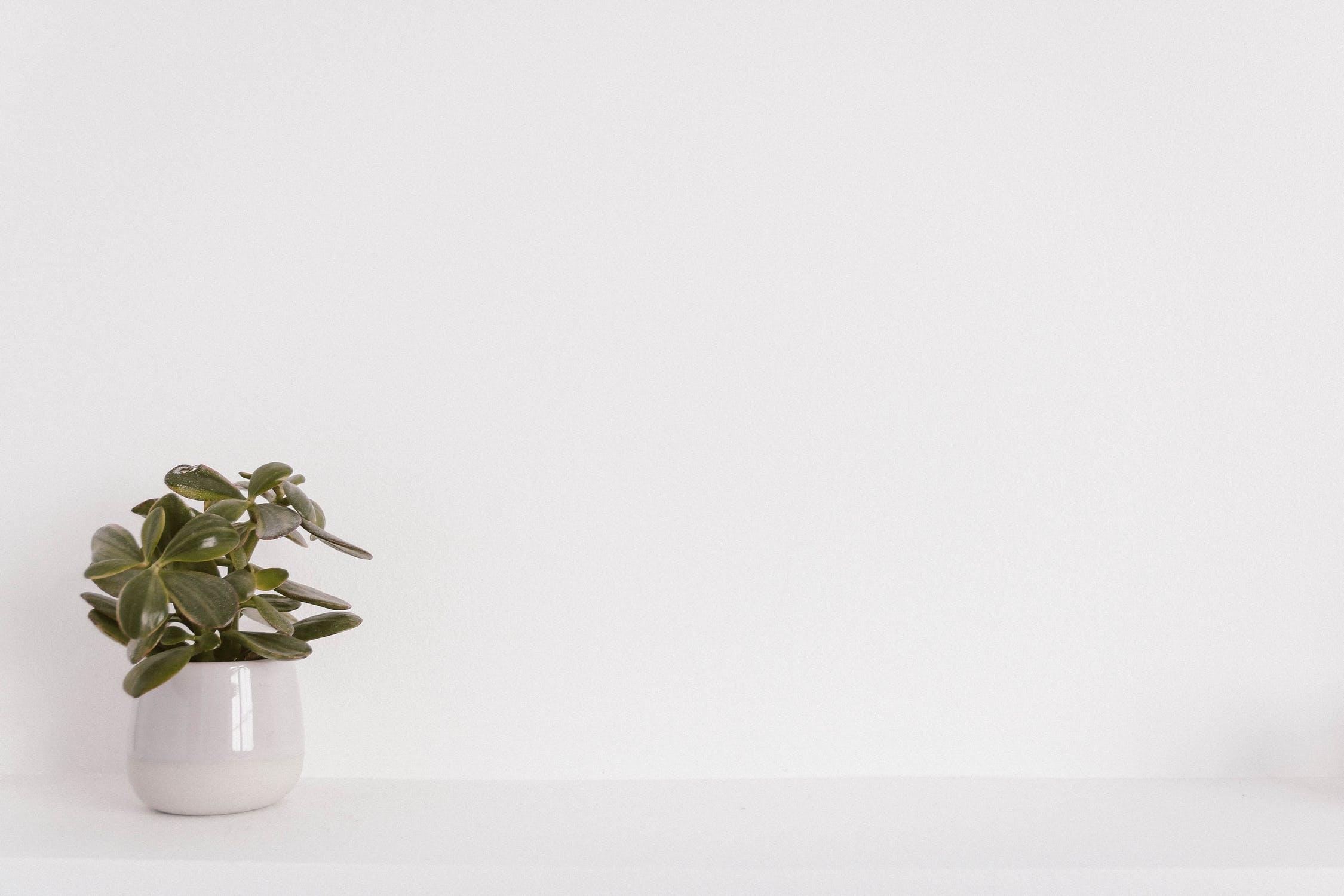 eine Pflanze steht am linken Bildrand in einem weißen Topf vor weißem Hintergrund