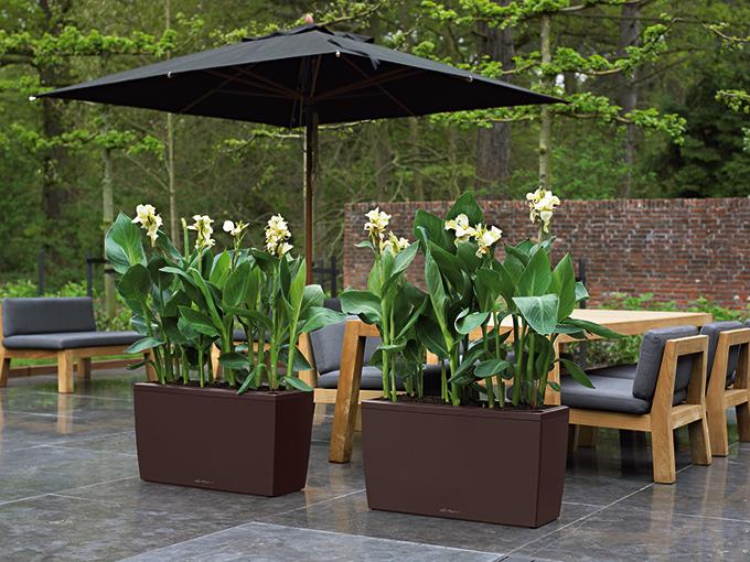 canna das indische blumenrohr im gro en pflanzkasten das pflanzk bel blog. Black Bedroom Furniture Sets. Home Design Ideas