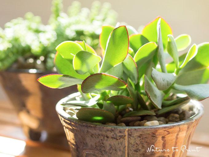 übertöpfe Für Zimmerpflanzen die neue lust an zimmerpflanzen mehr als grüne dekoration