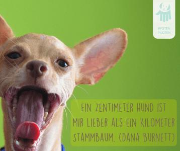 Okay Boomer Ok Generation Z Meme Hund Dog Fun Blau Vinyl Decal