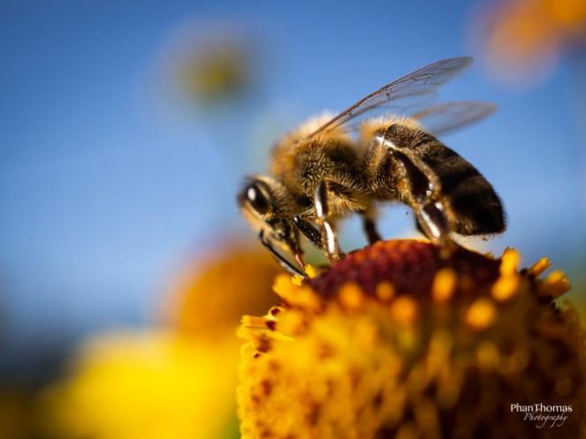 Makrofotografie: Bienchen und Blümchen 5