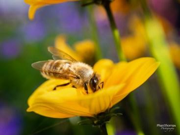 Makrofotografie: Bienchen und Blümchen 2
